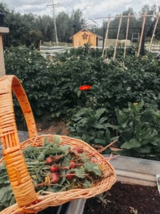 Tips for Growing Your Own Garden