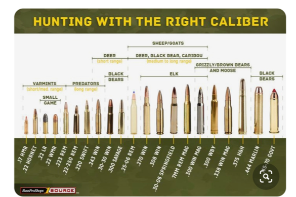 Firearms for Beginners